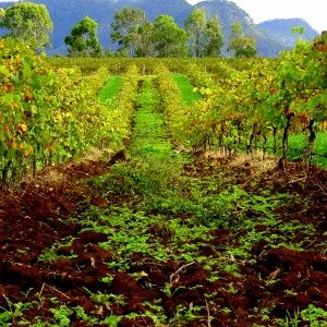 Hunter_Valley_Means_Vineyards